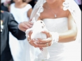 fotografii nunta Sibiu (34)